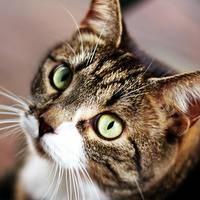 Mimi, Cat Broker